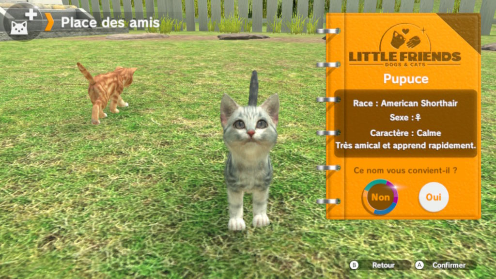 Little Friends - adoption pupuce